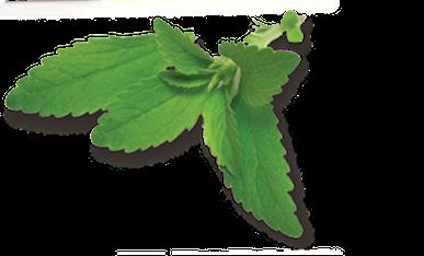 MBT Stevia leaf image